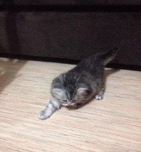 Котёнок полосатый