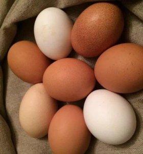 Яйцо куриное домашнее крупное