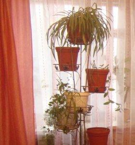 Комплект шторы(ночные и дневная+ покрывало)