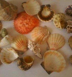 Ракушки разные для украшения аквариума