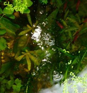 Аквариумные живые растения