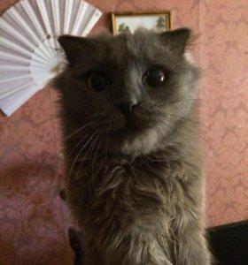 Кошка вислоухая