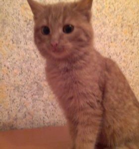 мышеловы-котята