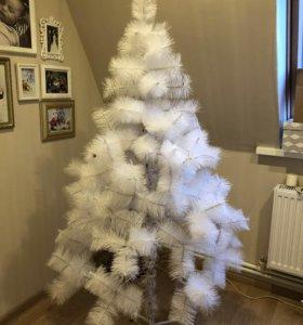 Ель рождественская