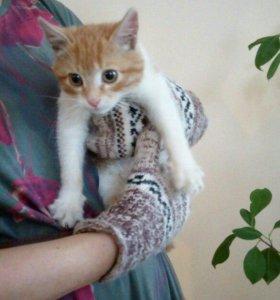 Рыжий котик в добрые руки