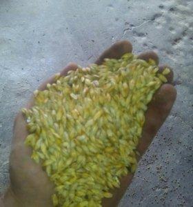 Зерно Комбикорма