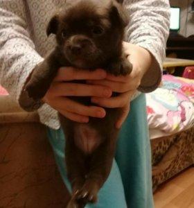 Прекрастная собачка Люси ждет своего хозяина