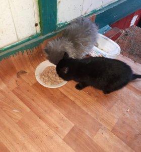 котята жалко кто заберет...кошки...