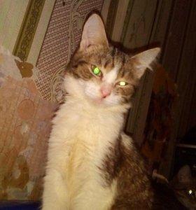 Котёнок Сашуля