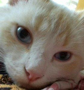 Котик Сеня