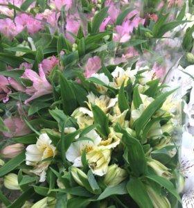 Продам Цветы и корни