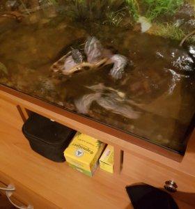Красноухие черепахи.
