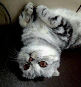 Кот Котофейка, ласковый мужчина.