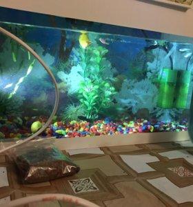 Аквариум +рыбки