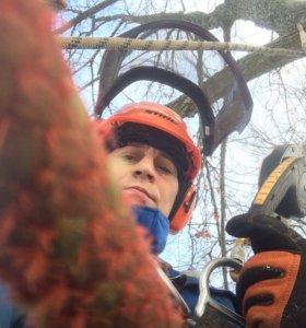 Спилить Удалить Срубить дерево, по частям.
