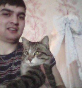 Подброшен кот