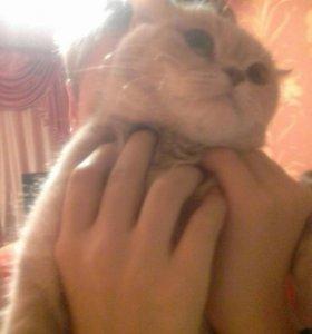 Кошка завут Лиза одаём в харошие руки
