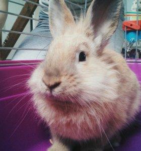 Кролик для вязки