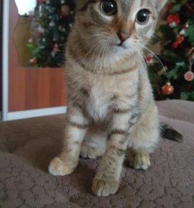 Кошечка-красавица 4 месяца
