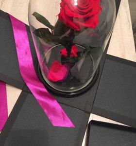 Роза в колбе опт и розница