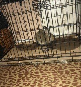 Клетка,кролик