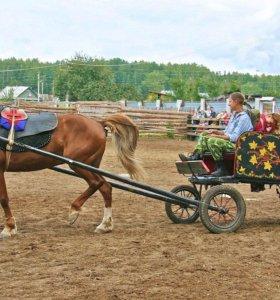 Конные прогулки, занятия для детей