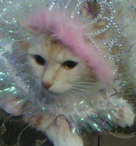 Кошечка на вязку