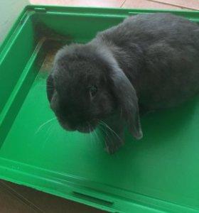 Кролик 🐇
