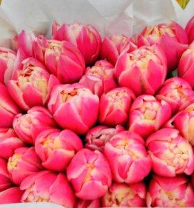 Тюльпаны оптом, букеты с доставкой в СПб