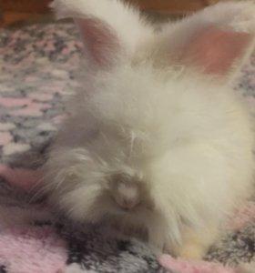 Кролики пуховые немецкая ангора