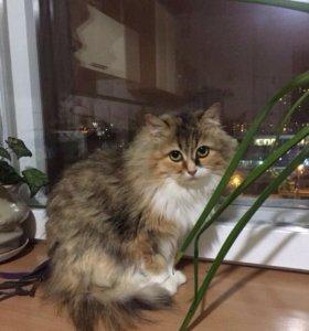 Кошка, кот, ищут дом