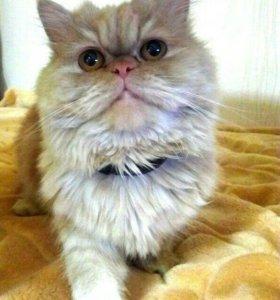Очаровательная кошечка