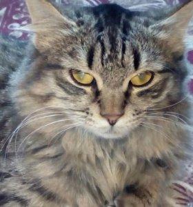 кошка Рыся