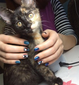 Кошечка в добрые руки.