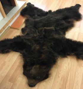 Шкурка медведя