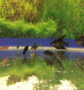 Аквариум с рыбками и удобствами