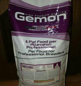 Gemon Dog PFB