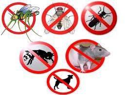 Дезинфекция от тараканов, клопов, грызунов, и т.д.