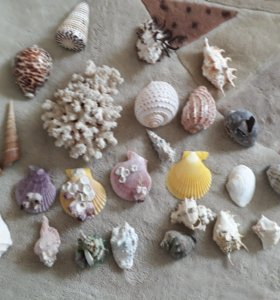 Ракушки, коралл в ассортименте