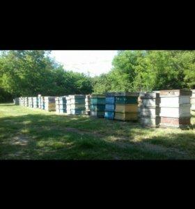 Пчелопакеты, рут -дадан