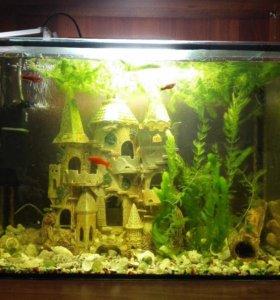 Аквариум с рыбами (компрессор,грунт,растения,грот)
