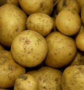Картофель-Доставка