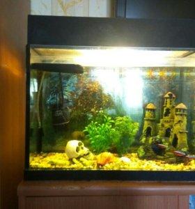 Аквариум с рыбками 19 литров