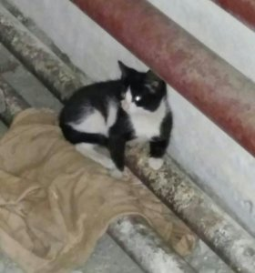Отдам котёнка от кошки крысоловки.