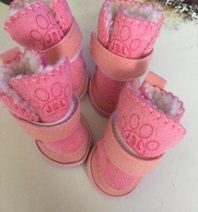 Обувь для маленьких собачек