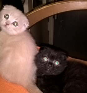 Плюшевые котики