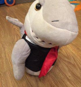 Поющая акула