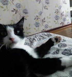 Отдам кота Маркиза