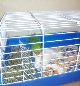 Кролик декоративный с большой клеткой