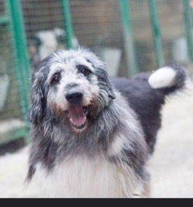 Собака из приюта бесплатно, даром, в добрые руки